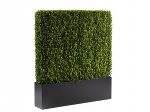 CEAC-003 4 ft Boxwood Hedge